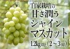 【ふるさと納税】B2-460自家栽培の甘さ潤うシャインマスカット1.2kg以上2-3房(HO)【発送8月下旬~10月下旬】