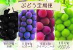 E-108.よくばり4種!贅沢ぶどう【定期便】(KSB)