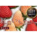 【ふるさと納税】【先行受付】紅白いちご詰合せ24個入り【10