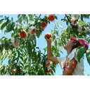 【ふるさと納税】山梨の農業、中央市の自然と歴史に触れる日帰りツアー お二人様パック 【体験チケット】 お届け:2021年6月初旬〜6月中旬