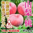 【ふるさと納税】山梨の桃 約2kg(6〜8玉) 収穫時期で選