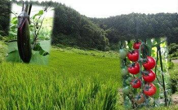 【ふるさと納税】001-043 橋原蛍米+季節野菜セット