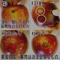 【ふるさと納税】台風被害農家応援りんご【訳あり】サンふじ約10kg
