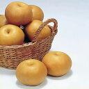 【ふるさと納税】≪秋頃より発送≫梨(南水)約5kg《村石果樹