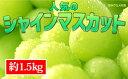 【ふるさと納税】☆先行予約【新鮮果実】人気のシャインマスカッ...