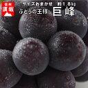 【ふるさと納税】☆先行予約【人気のブドウ】巨峰 約1.8kg...