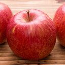 【ふるさと納税】サンふじ 【果物・フルーツ・りんご・林檎】 ...