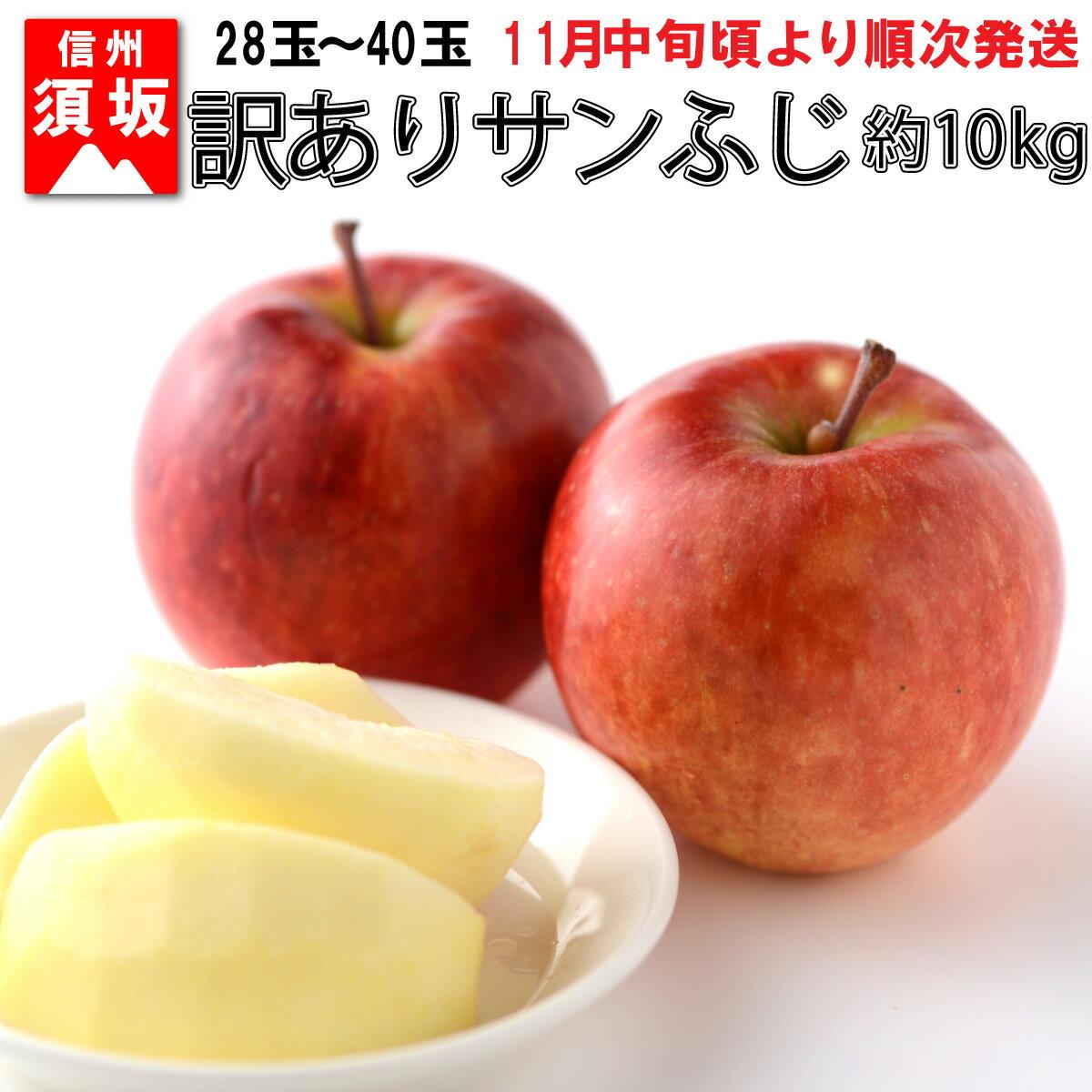 [信州須坂のりんご]訳ありサンふじ 約10kg [果物・フルーツ] お届け:2020年11月20日〜12月25日