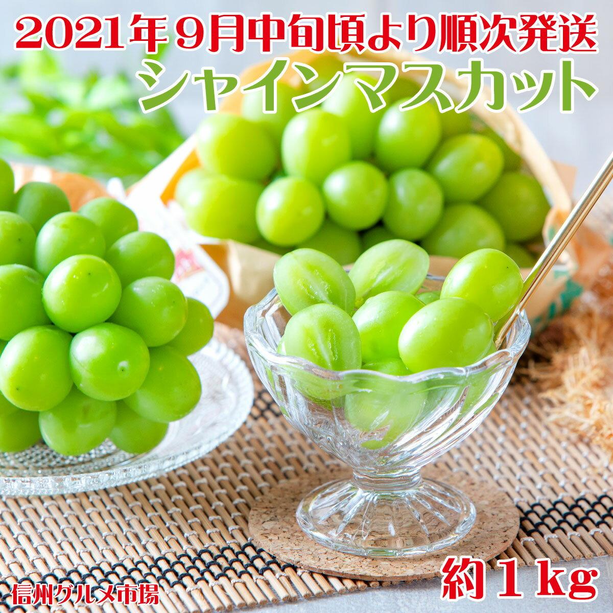 シャインマスカット 約1kg《信州グルメ市場》■2021年発送■※9月中旬頃より順次発送予定 果物 フルーツ ぶどう