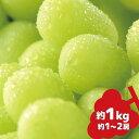 【ふるさと納税】シャインマスカット 約1kg《信州グルメ市場》■2021年発送■※9月中旬頃より順次発送予定 果物 フルーツ ぶどう 先行予約 期間限定 数量限定・・・