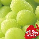 【ふるさと納税】シャインマスカット 約1.5kg《信州グルメ市場》■2021年発送■※9月中旬頃より順次発送予定 果物 フルーツ ぶどう 先行予約 期間限定 数量限定・・・