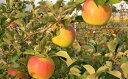 【ふるさと納税】福井りんご園の名月 約5kg 【果物類/林檎...