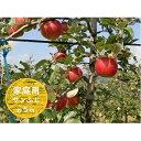【ふるさと納税】信州小諸・福井りんご園のサンふじりんご(家庭...