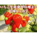 【ふるさと納税】小諸産いちご4パック詰め合わせ 【果物類・い...