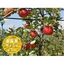 【ふるさと納税】信州小諸・福井りんご園のサンふじりんご(家庭用)約5kg 【果物類・林檎・りんご・リンゴ・サンふじ・約5kg・家庭用】 お届け:2021年11月下旬〜12月下旬