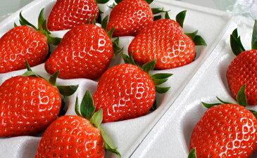【ふるさと納税】南信州産いちご 2種類食べ比べセット300g×8パック たかずやファーム 【果物類・いちご・苺・イチゴ】 お届け:2019年1月上旬〜2月中旬