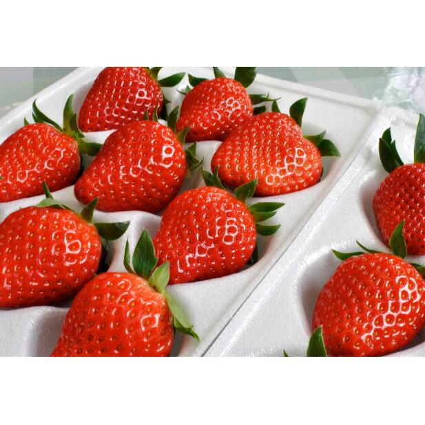 フルーツ・果物, いちご  (300g8) 202011535