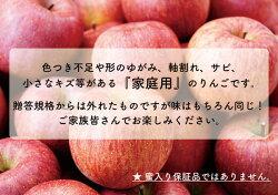 【ふるさと納税】<先行予約> りんご 訳あり サンふじ 家庭用 10kg 画像1