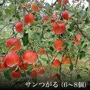 【ふるさと納税】サンつがる(6〜9個)<出荷時期:2021年9月上旬〜下旬>【 りんご フルーツ 長野県 飯山市 】