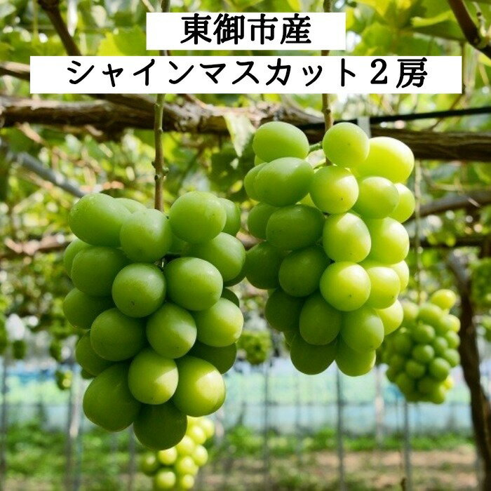 【ふるさと納税】東御市産シャインマスカット2房(10月お届け)