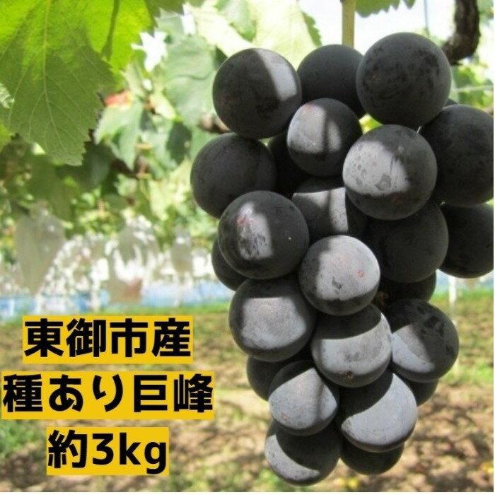 【ふるさと納税】東御市産種あり巨峰約3kg(9月お届け)