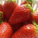 【ふるさと納税】甘くて美味しい高品質の「アルプスいちご」約300g×4