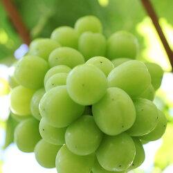 【ふるさと納税】≪特別支援≫[数量限定]皮ごと・種無しブドウ!長野県産 シャインマスカット 約2kg 秀品 大人気のぶどう!※2021年9月上旬〜9月下旬頃に順次発送予定※着日指定はできません。沖縄・離島への発送不可。・・・ 画像1