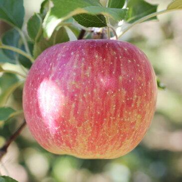 【ふるさと納税】りんごのトップバッターサンつがる! 長野県産約5kg 秀品 ※着日指定はできません。沖縄・離島への発送不可。※8月中旬〜9月中旬頃に順次発送予定