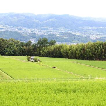 【ふるさと納税】長野県オリジナル米 風さやか 10kg(精米)2018年度産 ※着日指定はできません。沖縄・離島への発送不可。※10月下旬頃より順次発送予定