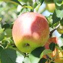 【ふるさと納税】りんごのトップバッターつがる! 長野県産 りんご(つがる) 約10kg 秀品※2020年8月中旬〜9月中旬頃順次発送予定※着日指定はできません。沖縄・離島への発送不可。