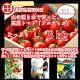 【ふるさと納税】長野県根羽村産山の湧き水で育った高原トマト「フルティカ」がたっぷり1.8k…