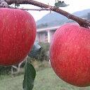 【ふるさと納税】JAながの りんご シナノスイート【特秀】約10kg 【果物類・林檎・りんご・リンゴ】 お届け:2021年10月上旬〜10月下旬