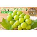 【ふるさと納税】宮原ぶどう園のシャインマスカット 約2kg(