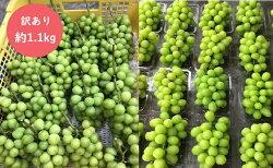 【ふるさと納税】柳澤果樹園 訳ありシャインマスカット約1.1kg(粒・房混合) 【果物類・ぶどう・マスカット・フルーツ・葡萄・訳あり・シャインマスカット・約1.1kg】 お届け:2021年8月下旬〜2021年11月上旬・・・ 画像2