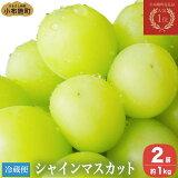【ふるさと納税】シャインマスカット(約1kg)