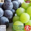 【ふるさと納税】ぶどうの味比べナガノパープル&シャインマスカット(約2kg)