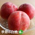 【ふるさと納税】お中元対応可季節の白桃約4kg