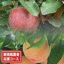 【ふるさと納税】新規就農者応援コース 季節のももとりんごコー...