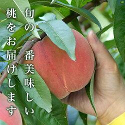 【ふるさと納税】小布施町 桃の食べ比べ定期便コース(約1.5kg 3回) 画像1