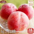 【ふるさと納税】旬の白桃約1.5kg