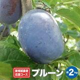 【ふるさと納税】新規就農者応援コース プルーン 約2.2kg