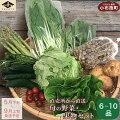 【ふるさと納税】新規就農者応援コース小布施めぐる野菜セット