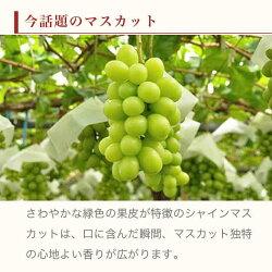 【ふるさと納税】シャインマスカット(約1kg) 画像2