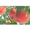 【ふるさと納税】もも(白鳳)約5kg 【果物・もも・桃・フル