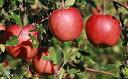 【ふるさと納税】飯綱の季節のりんご サンふじ 約5kg ※ク...
