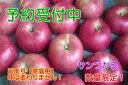 【ふるさと納税】【予約販売】サンつがるりんご 家庭用10kg...