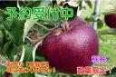 【ふるさと納税】【予約販売】秋映りんご 家庭用10kg(サイ...