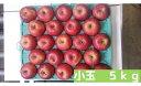 【ふるさと納税】【先行予約】飯綱町 丸茂ファームのりんご サ