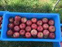 【ふるさと納税】【先行予約】 松澤農園 の りんご 【 サン