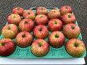 【ふるさと納税】【先行予約】 丸西農園 の りんご 【 サン...